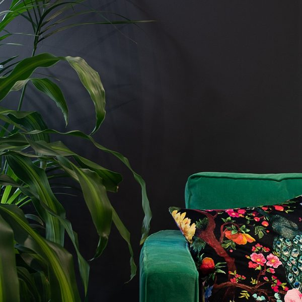 Green sofa with cushion and green plant in front of graphite grey wall