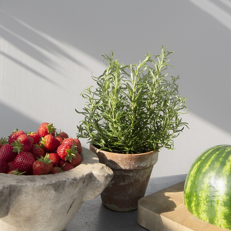 White Pepper wall with herb plant, strawberries and watermelon on kitchen table top