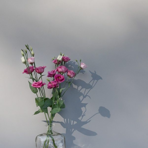 Pink flowers in glass vase in front of light grey wall